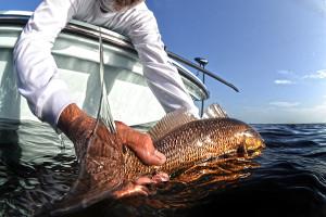 fly fishing boca grande rex